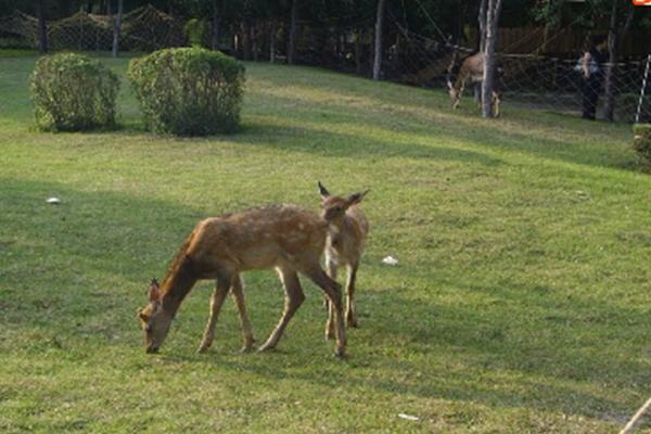 阿城平山鹿苑